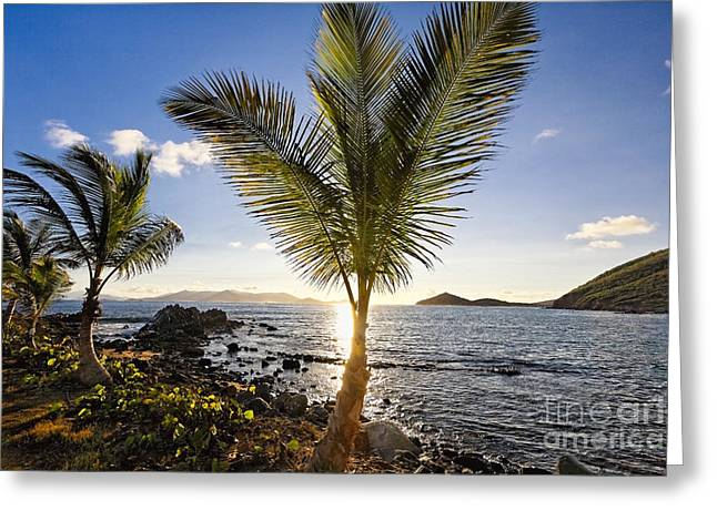 Breezy Greeting Cards - Palm Trees in Sunrise Greeting Card by George Oze