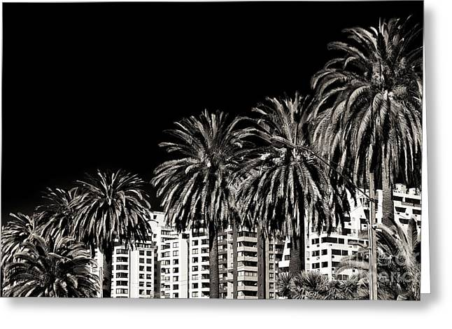 Vineyard Poster Greeting Cards - Palm Trees in Vina del Mar Greeting Card by John Rizzuto