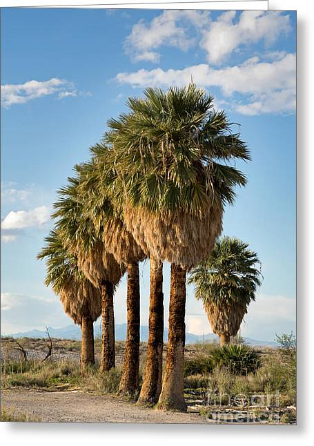 Spring Scenes Greeting Cards - Palm trees Greeting Card by Jane Rix