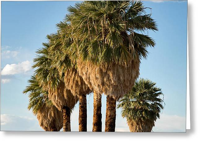 Palm trees Greeting Card by Jane Rix