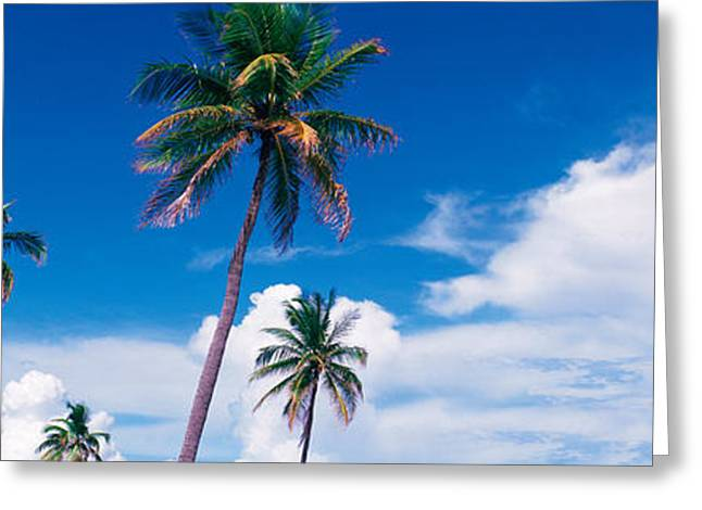 Fl Greeting Cards - Palm Trees Miami Fl Usa Greeting Card by Panoramic Images