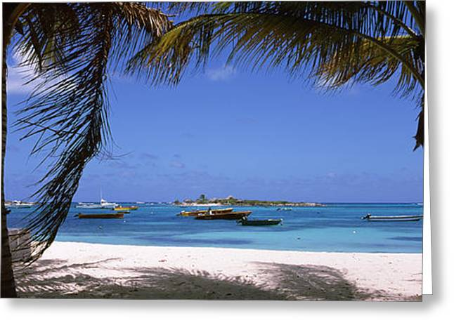 Water Vessels Greeting Cards - Palm Trees On The Beach, Anguilla Greeting Card by Panoramic Images