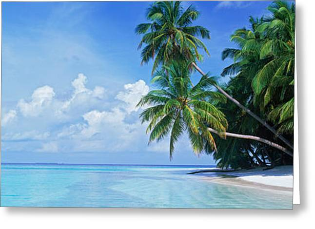Palm Trees On The Beach, Fihalhohi Greeting Card by Panoramic Images