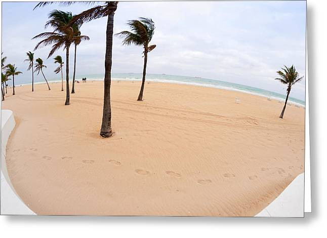 Broward Greeting Cards - Palm Trees On The Beach, Fort Greeting Card by Panoramic Images