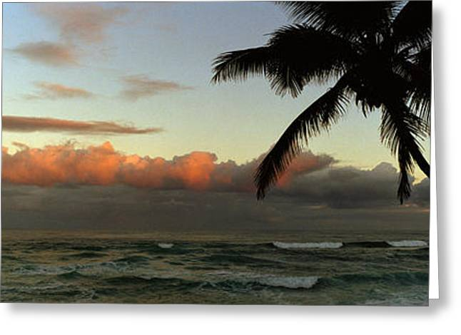 Horizon Over Water Greeting Cards - Palm Trees On The Beach, Hawaii, Usa Greeting Card by Panoramic Images