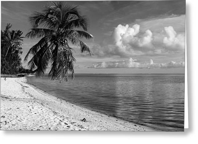 Boras Greeting Cards - Palm Trees On The Beach, Matira Beach Greeting Card by Panoramic Images