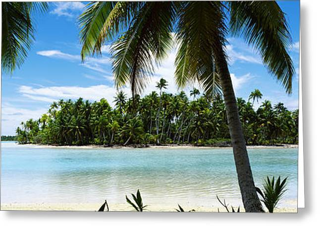 Archipelago Greeting Cards - Palm Trees On The Beach, Rangiroa Greeting Card by Panoramic Images