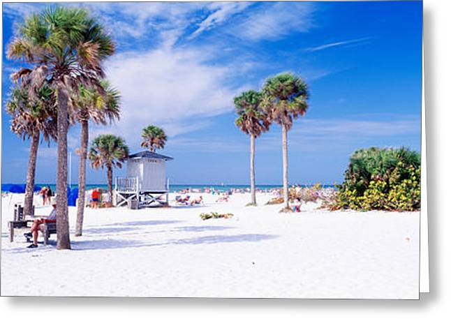 Seascape Photography Photographs Greeting Cards - Palm Trees On The Beach, Siesta Key Greeting Card by Panoramic Images