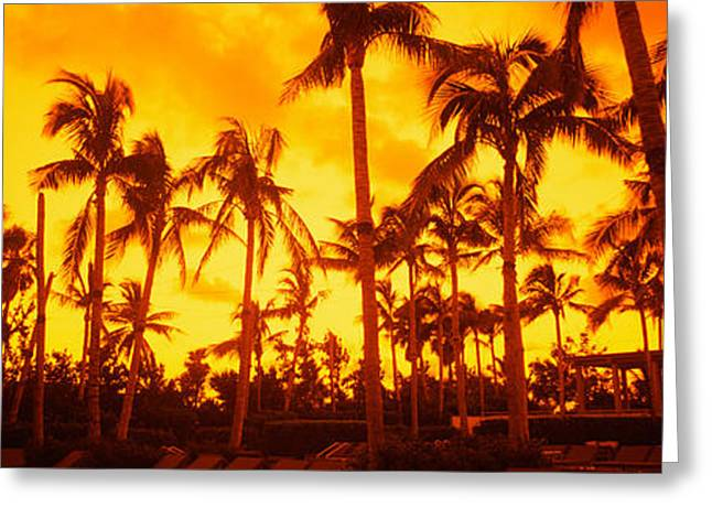 Beach Photography Greeting Cards - Palm Trees On The Beach, The Setai Greeting Card by Panoramic Images