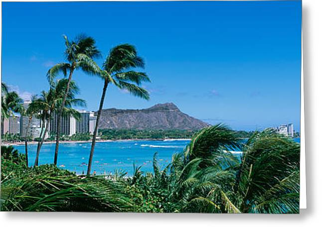 Waikiki Greeting Cards - Palm Trees On The Beach, Waikiki Beach Greeting Card by Panoramic Images