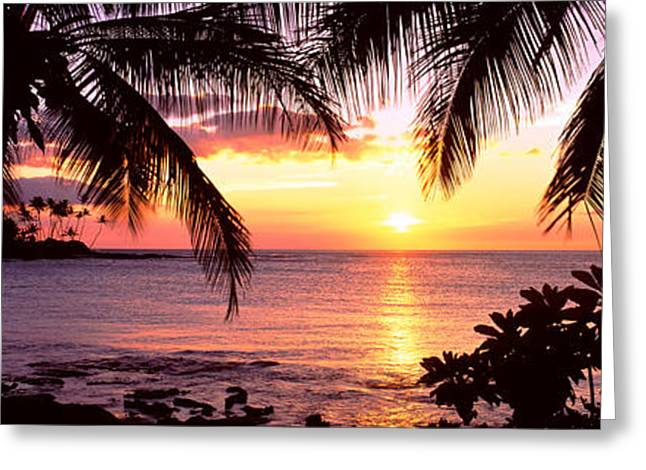 Beach Photography Greeting Cards - Palm Trees On The Coast, Kohala Coast Greeting Card by Panoramic Images