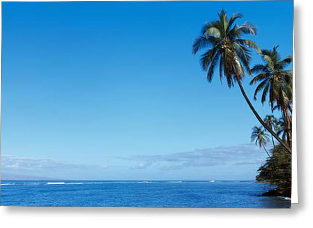 Lahaina Photographs Greeting Cards - Palm Trees On The Coast, Lahaina, Maui Greeting Card by Panoramic Images