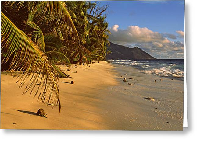 Panoramic Ocean Greeting Cards - Palm Trees On The Edge Of A Small Greeting Card by Panoramic Images