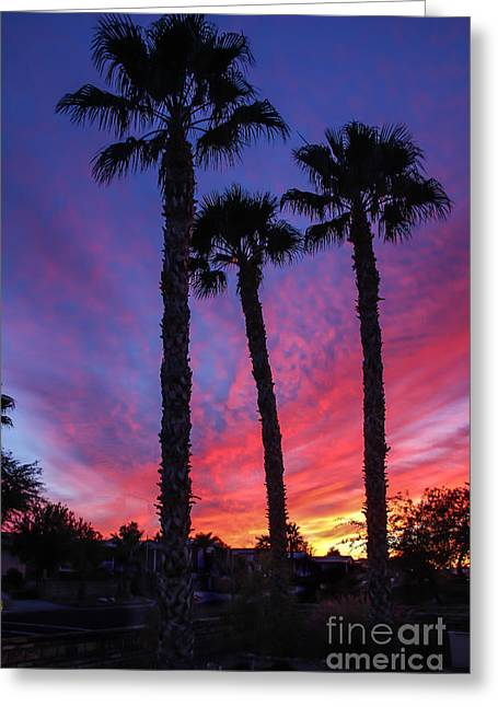 Haybale Photographs Greeting Cards - Palm Trees Sunset Greeting Card by Robert Bales
