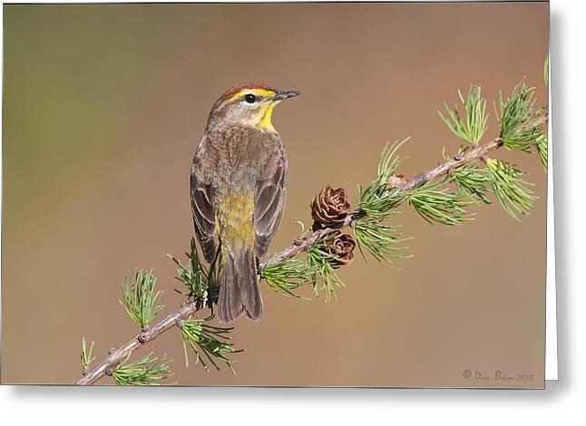Warbler Digital Art Greeting Cards - Palm Warbler  Greeting Card by Daniel Behm
