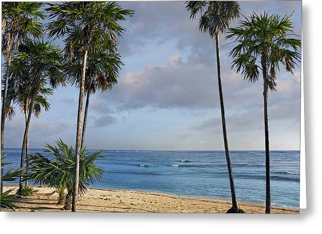 Tim Fitzharris Greeting Cards - Palmetto Bay in Honduras Greeting Card by Tim Fitzharris