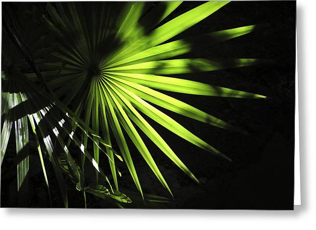 Marilyn Hunt Greeting Cards - Palmetto Rays Greeting Card by Marilyn Hunt