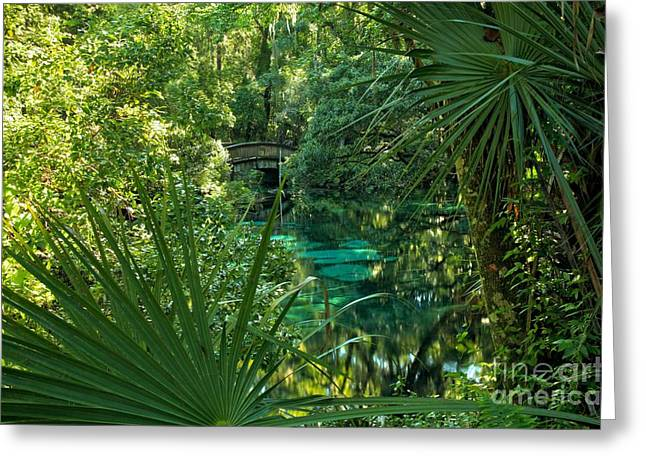 Oak Hammocks Greeting Cards - Palms At Fern Hammock Greeting Card by Adam Jewell