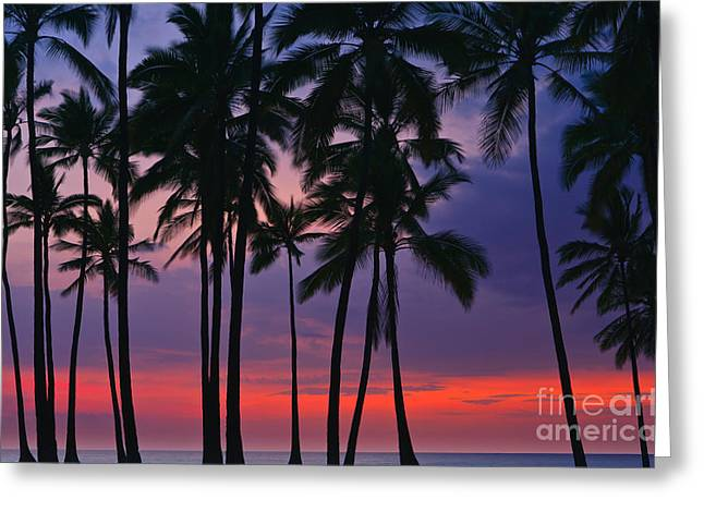 Pacific Ocean Prints Greeting Cards - Palms at Sunset at Puuhonua o Honaunau National Historical Par Greeting Card by Henk Meijer Photography
