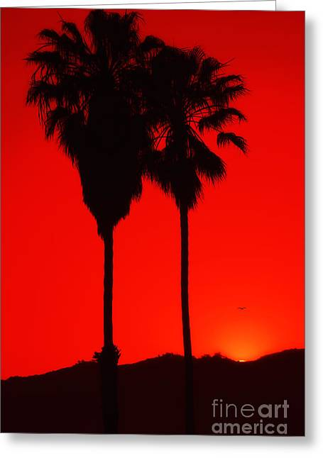 A Summer Evening Greeting Cards - Palms at Sunset Greeting Card by Billie-Jo Miller