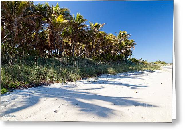 Florida East Coast Greeting Cards - Palms by the Shore Greeting Card by Michelle Wiarda