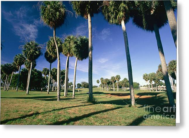 Tropical Golf Course Greeting Cards - Palms of  Point Borinquen Golf Course Greeting Card by George Oze