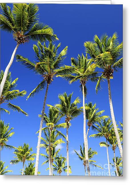 Abstract Palm Trees Greeting Cards - Palms on blue sky Greeting Card by Elena Elisseeva