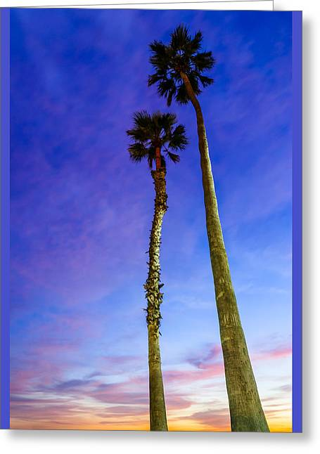 California Beach Art Greeting Cards - Palms Greeting Card by Radek Hofman