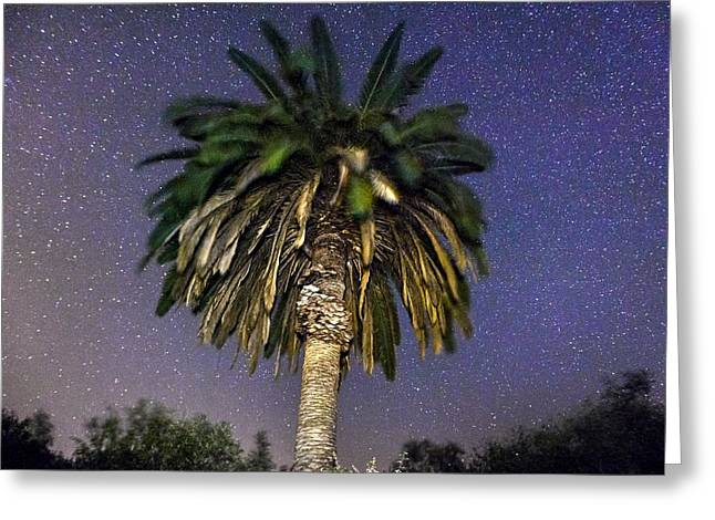 Constellation Greeting Cards - Palmtree in Alentejo Greeting Card by Andre Goncalves