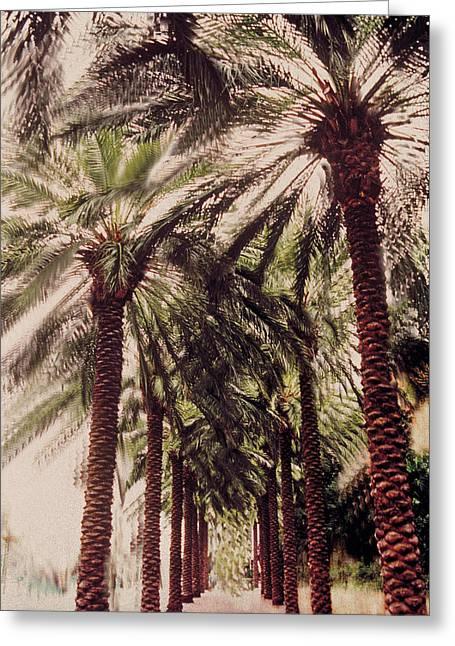 Caribbean Island Greeting Cards - Palmtree Greeting Card by Jeanette Korab