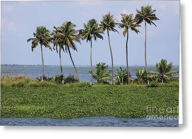 Kerala Greeting Cards - Palmtrees in the Kerala Backwaters in India Greeting Card by Robert Preston