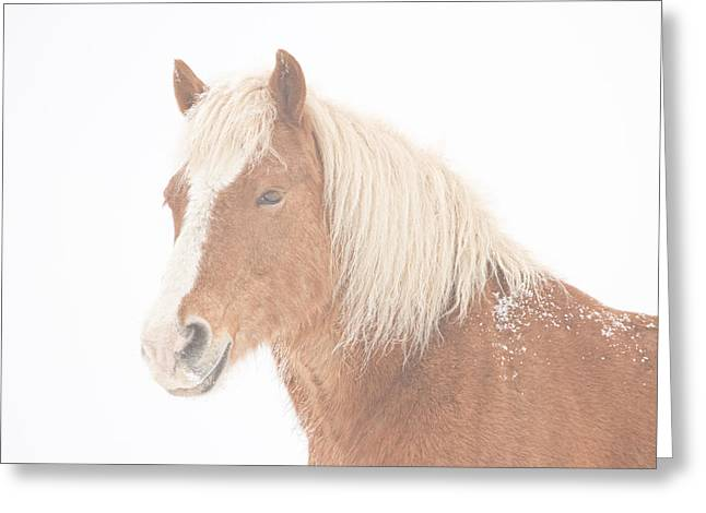 Rocky Mountain Foothills Greeting Cards - Palomino Horse Headshot Snow and Fog Greeting Card by James BO  Insogna