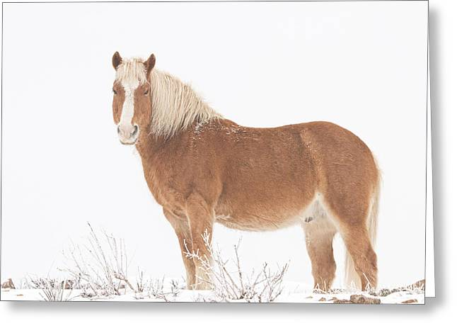 Rocky Mountain Foothills Greeting Cards - Palomino Horse in the Snow Greeting Card by James BO  Insogna