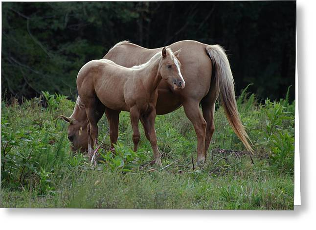 Paul Lyndon Phillips Greeting Cards - Palomino Mother and Daughter - c0726a Greeting Card by Paul Lyndon Phillips
