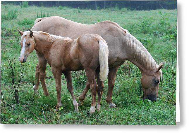 Palomino Mother And Yearling 08910792a Greeting Card by Paul Lyndon Phillips