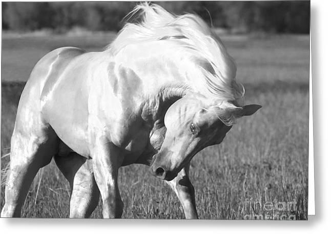 Horse Run Greeting Cards - Palomino Stallion  Runs Greeting Card by Carol Walker