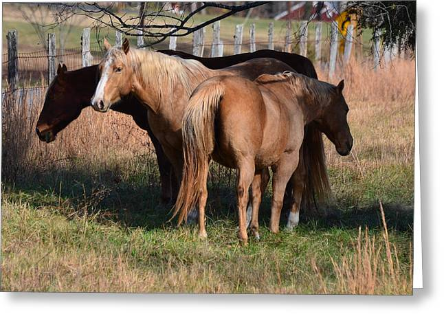 Old 421 Greeting Cards - Palominos - 51008341f Greeting Card by Paul Lyndon Phillips