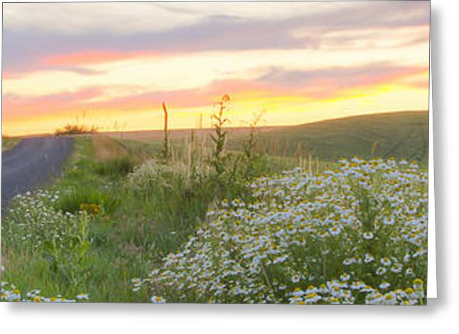 North Idaho Greeting Cards - Palouse Daisies Pano Greeting Card by Idaho Scenic Images Linda Lantzy