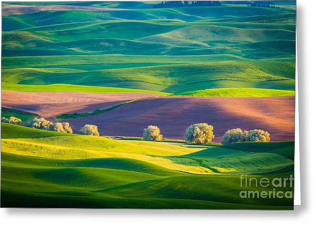 Rural Scenery Greeting Cards - Palouse Field 3 Greeting Card by Inge Johnsson