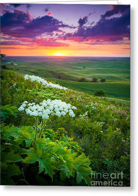 Harmonious Photographs Greeting Cards - Palouse Flowers Greeting Card by Inge Johnsson