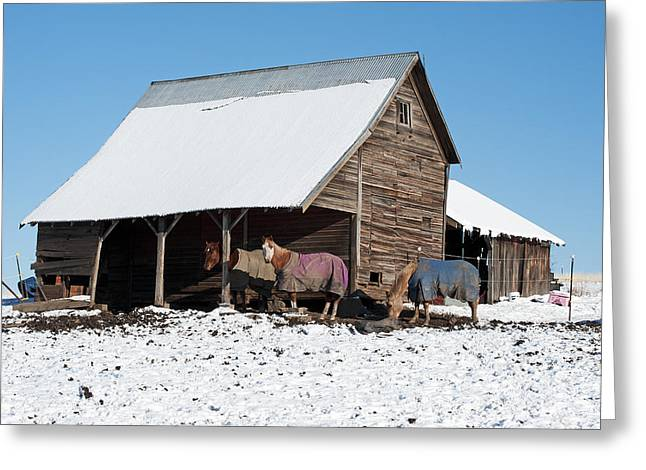 Contour Plowing Greeting Cards - Palouse Horses Greeting Card by Doug Davidson