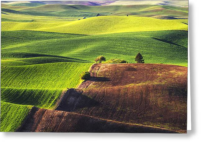 Palouse In Contrast Greeting Card by Mark Kiver