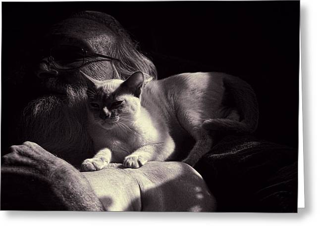 Tonkinese Greeting Cards - Pals Napping Greeting Card by Linda Phelps