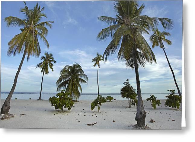 Tim Fitzharris Greeting Cards - Pamilacan Island in Philippines Greeting Card by Tim Fitzharris