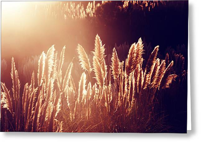Pampas Grass Greeting Cards - Pampas Grass Greeting Card by Mikel Martinez de Osaba