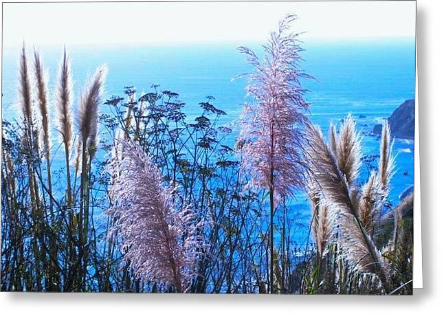 Big Sur California Greeting Cards - Pampas Grass over Big Sur Greeting Card by Julie Hughes