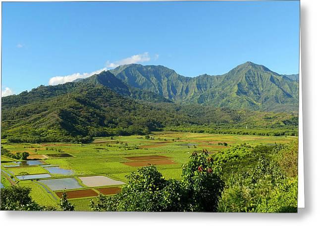 Pan, Hanalei Valley Lookout, Taro Greeting Card by Douglas Peebles