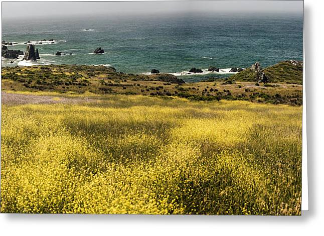 Big Sur Ca Greeting Cards - Panarama Spring On Califronia Coast By Denise DUbe Greeting Card by Denise Dube