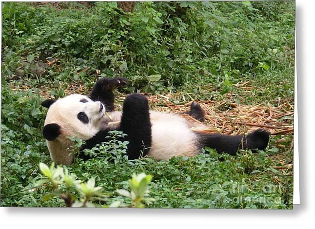 Cat On Back Greeting Cards - Panda on back Greeting Card by Noa Yerushalmi