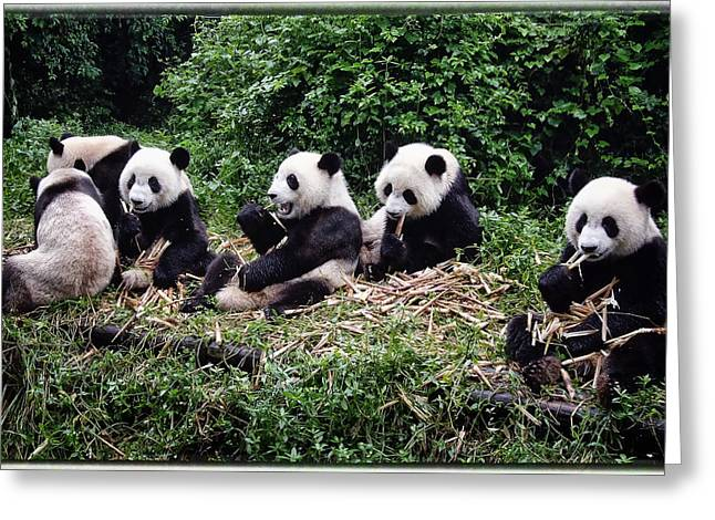Pandas In China Greeting Card by Joan Carroll